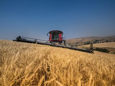 Harvest-Flory Farm
